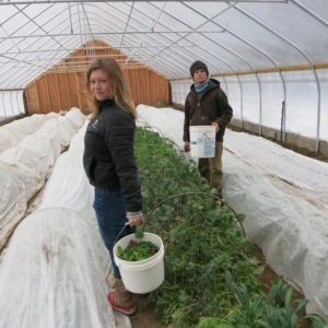 The Hoop House In The Cold Weather