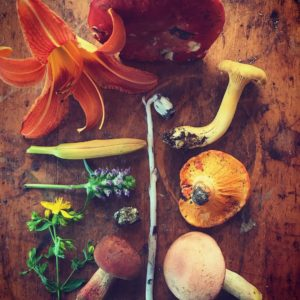 Foraging Walks At Bethel Farm W/ Jenna Rozelle : August 16th, 4:30 – 8:00 Pm